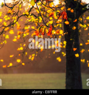 Close up of leaves on tree - Stock Photo