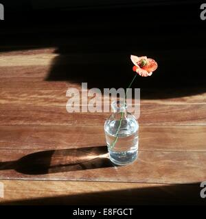 Poppy flower in a vase on wooden table - Stock Photo