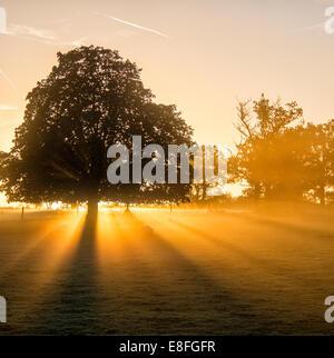 Sunlight streaming through trees at sunset, Berkshire, England, UK - Stock Photo
