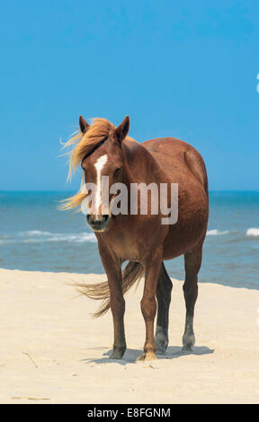 Brown horse on beach - Stock Photo
