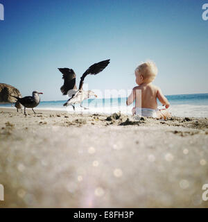Seagulls landing by a boy sitting on the beach with seagulls, Dana Point, Orange County, California, USA - Stock Photo