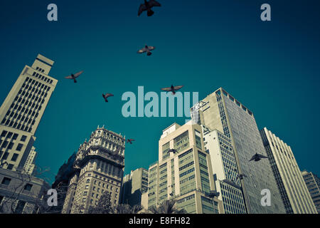 Birds flying over skyscrapers - Stock Photo
