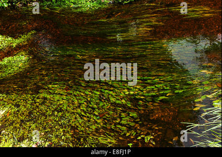 UK, England, Hampshire, New Forest National Park, Stream, flowing water and grass - Stock Photo
