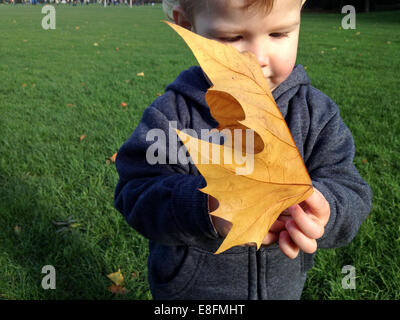 Boy standing in park holding a large autumn Leaf - Stock Photo
