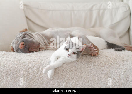 Cat and dog hugging on sofa - Stock Photo