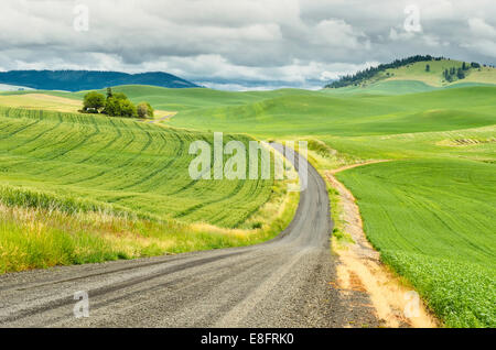 Road through wheat fields in a rural landscape, Palouse, Washington, USA - Stock Photo