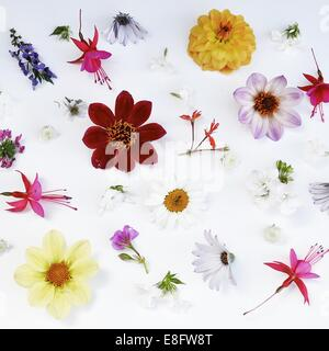 Still life of flowers on white table - Stock Photo