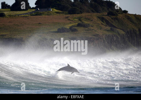 Dolphin leaping out of ocean