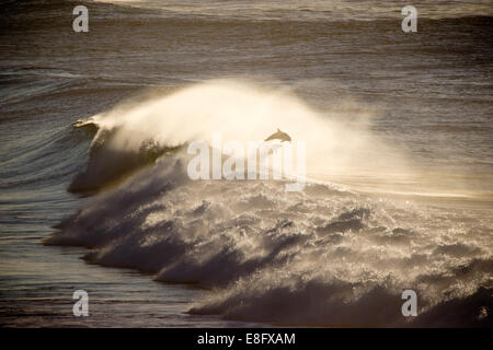 Dolphin leaping out of ocean - Stock Photo