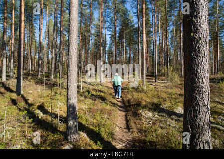 isolated elderly senior woman Nordic walking in the taiga forest , Finland