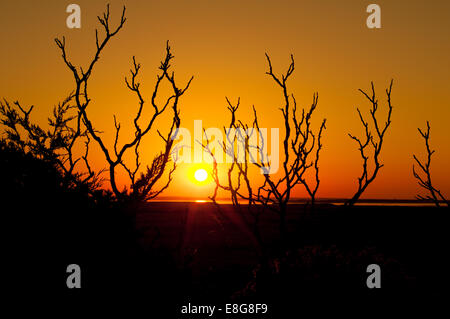 The sun sets into the sea behind some bare bush branches in Dennis, Massachusetts, USA - Stock Photo