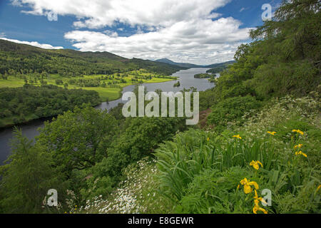 Stunning vast landscape of wildflowers, Loch Tummel, woodlands and distant mountains from Queens View lookout Pitlochry - Stock Photo