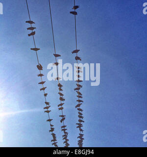 Low angle view of birds on power lines - Stock Photo