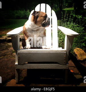 Dog sitting on a wooden chair in the garden - Stock Photo