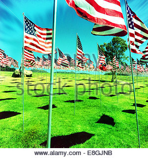 American flags on green meadow - Stock Photo