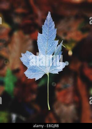 Close-up of autumn leaf - Stock Photo