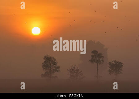 Indonesia, West Nusa Tenggara, Kabupaten Lombok Tengah, Lombok, Morning sun - Stock Photo