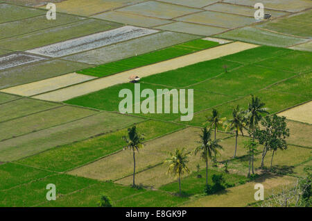 Indonesia, West Nusa Tenggara, Kabupaten Lombok Tengah, Selong Belanak, View of rice fields - Stock Photo