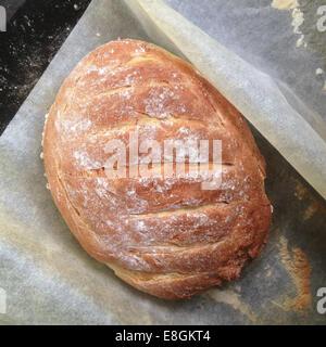 Freshly baked bread on baking paper - Stock Photo