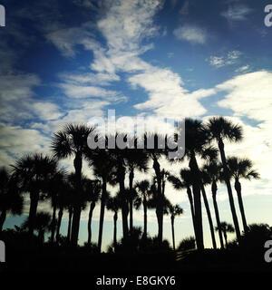 USA, Florida, Silhouette of palm trees - Stock Photo