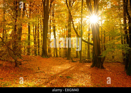 Sunlight in a mixed deciduous forest with old oaks and beech trees, Spessart Nature Park, Weibersbrunn, Bavaria, - Stock Photo