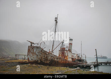 The wreck of the Petrel, a former whaler, at the former Stromness whaling station, abandoned in 1965, King Edward - Stock Photo