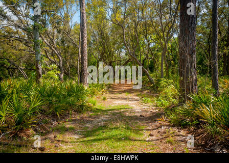 A wide trail through the pine-oak woodlands in Bon Secour National Wildlife Refuge. - Stock Photo