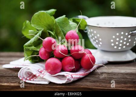 Fresh raddish on a towel in a garden - Stock Photo