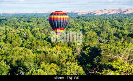 Single hot air balloon over a sea of trees - Stock Photo