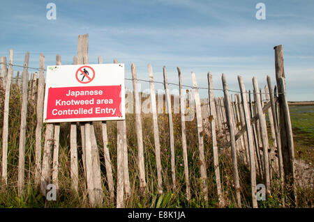 Japanese knotweed restricted area - Stock Photo