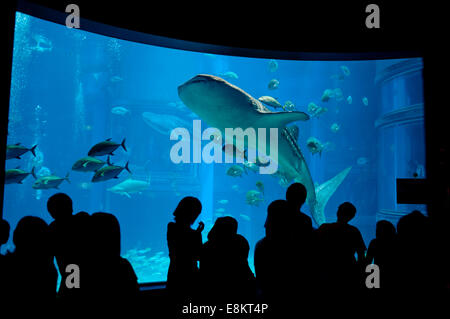 Whaleshark at Osaka aquarium, Japan. - Stock Photo