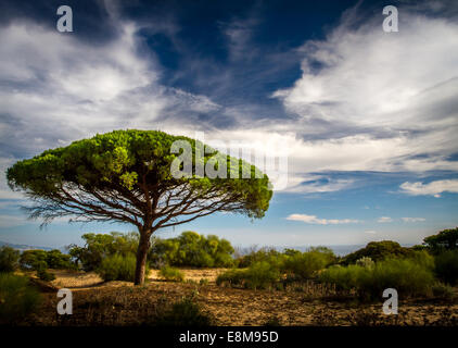 Dramatic tree in La Breña Natural Park at Barbate - Stock Photo