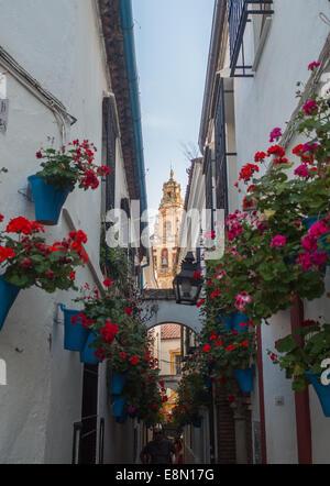 Cordoba Calleja de las Flores - Stock Photo