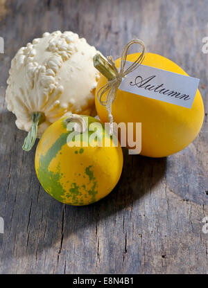 Autumn pumpkins  on old wood - Stock Photo