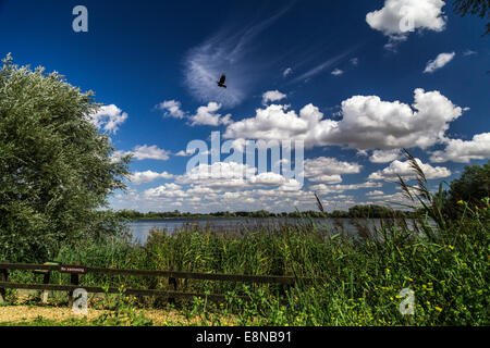 Sunny day, trees surround a lake. Sign says no swimming. - Stock Photo
