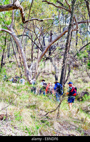 Hikers walking through Australian bush. Pilliga Forest NSW, - Stock Photo