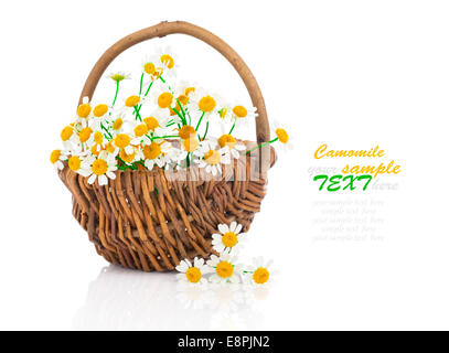beautiful camomile flowers in basket, isolated on white - Stock Photo