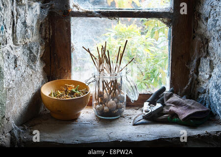 Collecting Poppy seed pods and flower seeds in jars on a shed window ledge - Stock Photo