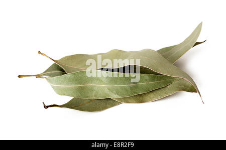 Dried eucalyptus leaves isolated on white background - Stock Photo