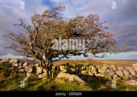 View towards Haytor in Dartmoor National Park, Devon, England - Stock Photo