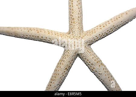 Starfish Cutout - Stock Photo