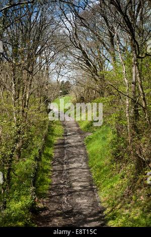 UK, England, Devon, Great Torrington, Tarka Trail - Stock Photo