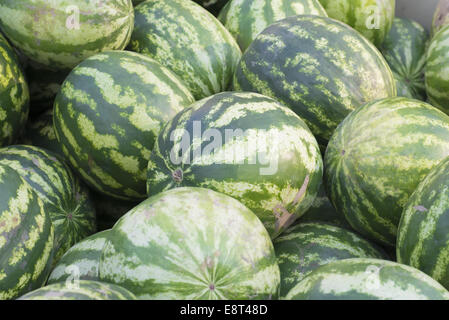 Pattern of many green watermelons. Agricultural background - Stock Photo