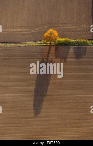 Aerial view, fields and a tree with shadow, North Rhine-Westphalia, Germany - Stock Photo