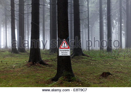 Warning sing 'Forstarbeiten', German for 'forestry works in process' in a misty spruce forest, Thuringian Forest, - Stock Photo