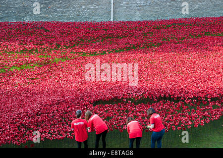 Tower of London Remembers poppy installation - Stock Photo