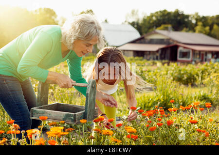 Caucasian grandmother and granddaughter picking flowers on farm - Stock Photo