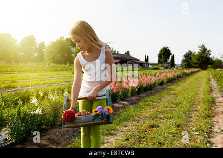 Caucasian girl picking flowers on farm - Stock Photo