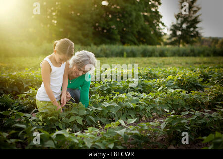 Caucasian grandmother and granddaughter picking plants on farm - Stock Photo