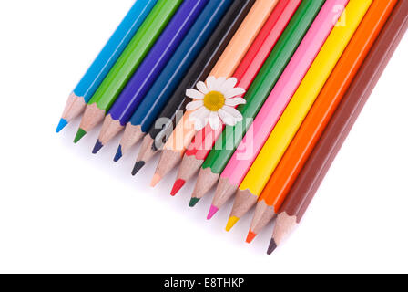 Flower on colored pencils isolated on a white background. - Stock Photo